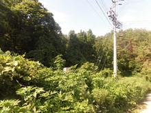 160719CIMG5994.JPG